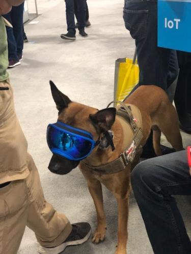VR Dog